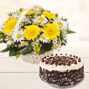 Gerbera With Black Forest Cake: Gifts For Him Sringar Colony,  Indore