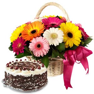 Mix Gerbera With Black Forest Cake: Gifts For Brother Raj Mohalla,  Indore