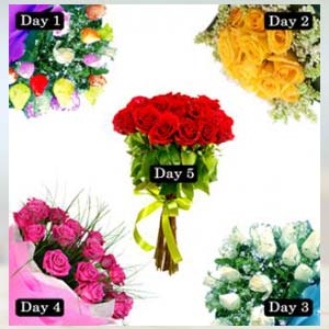 5 Roses bunch of days Serenade: Anniversary Radio-colony, Indore